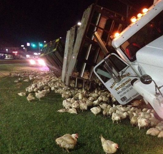 Chicken truck overturns near Dover, DE.  Photo by Delaware News Journal.